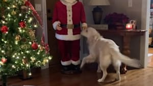 Joyful pup doesn't understand why Santa won't play