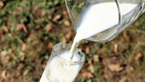 Mann trinkt drei Liter Milch pro Tag mit erschreckenden Folgen
