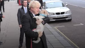 Dogs steal limelight on election day