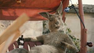 """""""Die Känguru-Chroniken"""": Trailer mit Rosalie Thomass und Henry Hübchen"""