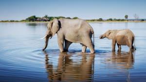 Mysteriöses Tiersterben: Hunderte Elefanten sterben in Botsuana auf ungeklärte Weise