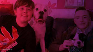 Teen paralyzed by freak accident with dogs