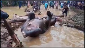 Rescuers save elephant stuck in flooded pit