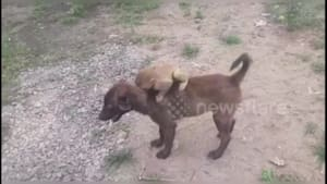 Dog brings a lost baby monkey to the police
