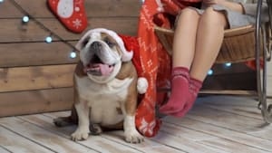 Christmas Foods Your Dog Should Never Eat!
