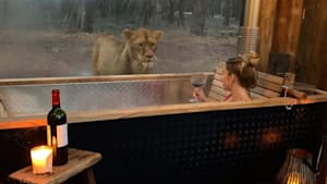 This Hotel Lets You 'Sleep With Lions'