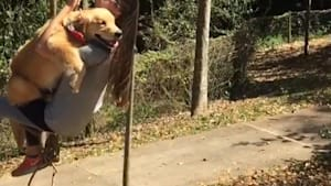 This dog loves to swing with her owner