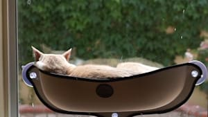This window mounted cat bed is puurrrrfect