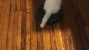 Cat rides around on robot vacuum cleaner
