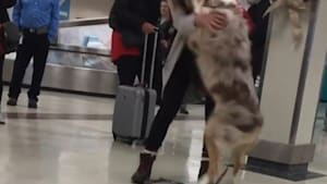Dog and owner reunite after four years apart