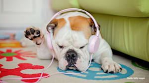 Playlisten für Haustiere bei Spotify