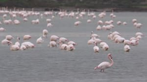 Check out this flock of flamingos
