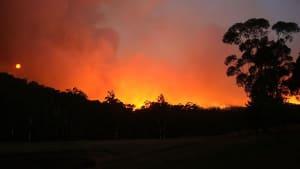 Buschbrände in Australien: So kann man von zu Hause aus helfen