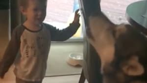 Howling competition between toddler and pup
