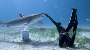 """This fearless freediver """"dances"""" with two massive tiger sharks"""
