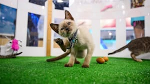 See the adorable cats appearing in the Kitten Bowl