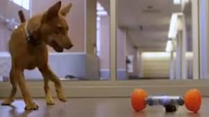 Exercise and entertain your dog with this bluetooth RC bone toy