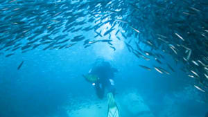 Breathtaking school of fish encircles divers