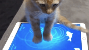 Cat plays fish game on an iPad