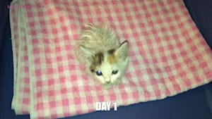 Rescued kitten evolution in just 7 days