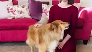 Singing dog duet will make you LOVE the opera