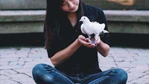 Rescued homing pigeon follows her human everywhere