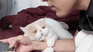 Adorable cat is a stage five clinger