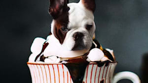 Artist pairs dogs with their spirit foods