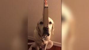 Dieser Hund hat die perfekte Balance