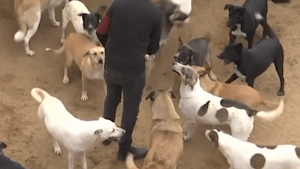 Street dogs in Egypt receive medical care