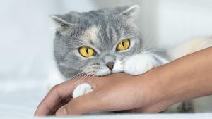 Fünf Gründe, warum deine Katze dich beißt
