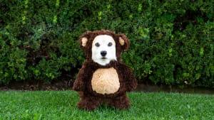Karneval: Darum kann es deinem Haustier schaden, wenn du es verkleidest