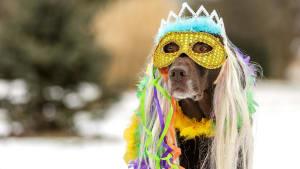 Haustiere an Karneval: Das gilt es für die Sicherheit eurer Vierbeiner zu beachten