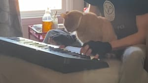 Cat enjoys a musical moment