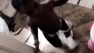 Toddler makes an epic mess with toilet paper