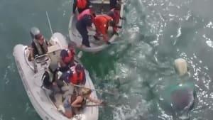 Rescuers free entangled humpback whale