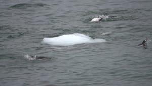 Penguins can't land on slippery iceberg