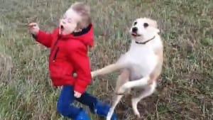 Dog hilariously knocks over little boy