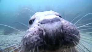 Seal bumps nose on camera