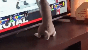 Cat wants to play a wrestling video game