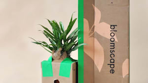 Modern company ships plants directly to your door