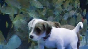 Foster puppies roam free in empty Georgia Aquarium