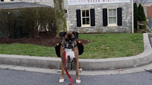 Winery dog is making curbside deliveries