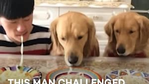 Man challenges dogs to a noodle eating competition