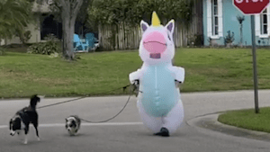Human unicorn stepped out to walk her dogs