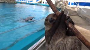 Begegnung im Lockdown: Delfine treffen Faultier