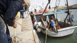EU-Fischerei leidet - aber Anchovis boomen dank Pizza