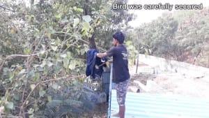 Guy rescues bird entangled in string