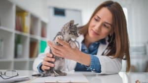 Kätzchen in Not: Tierärztin muss eine äußerst ungewöhnliche Methode anwenden