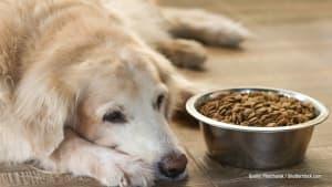 Ist euer Hund traurig? Das könnte dahinter stecken